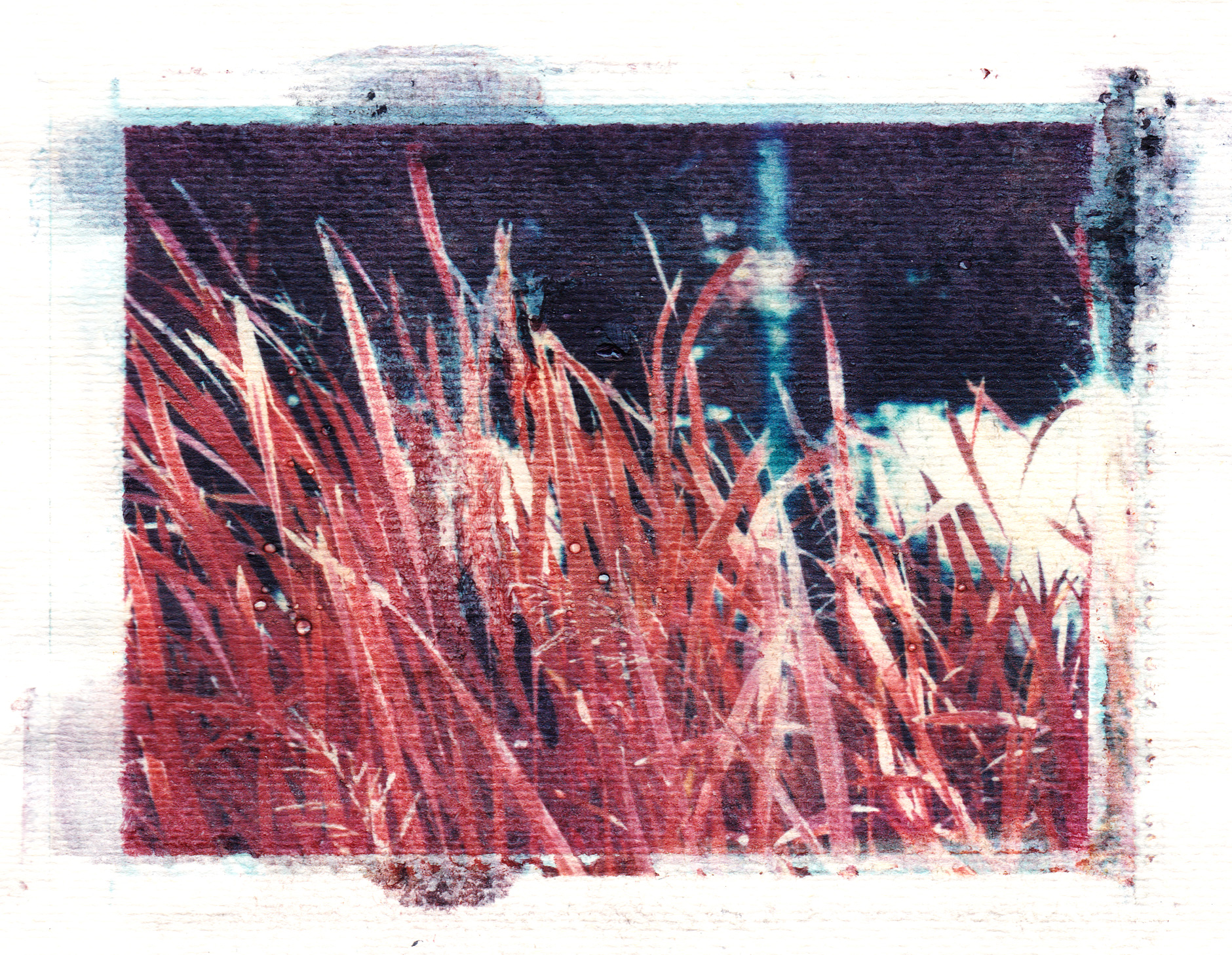 Polaroid transfer on paper infrared image of grass