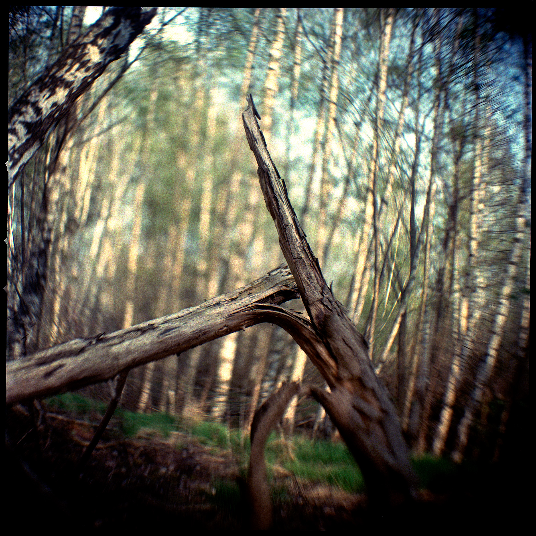 6x6 image shot with Hasselblad 500 camera color with soft focus