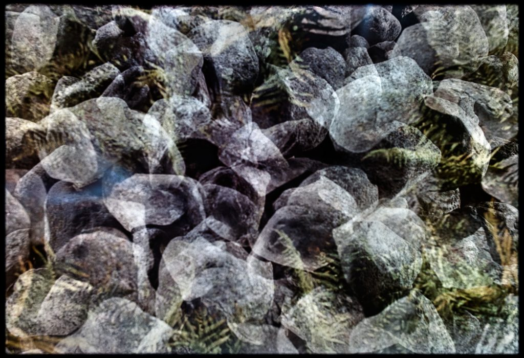 Multiple exposure of stones and leaves in the woods
