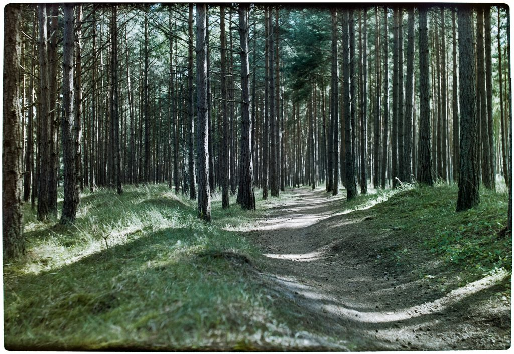Forest picture in color