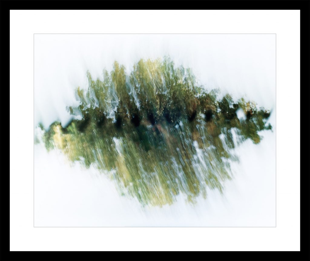 Trees double exposure abstract image with movement