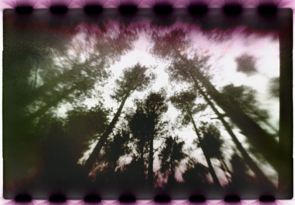 Abstract image of trees and leaves