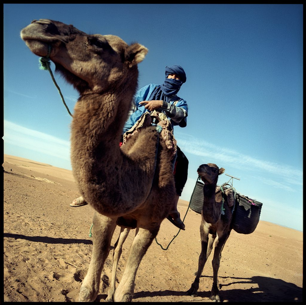 Color image with a man and a camel in the desert from marocco