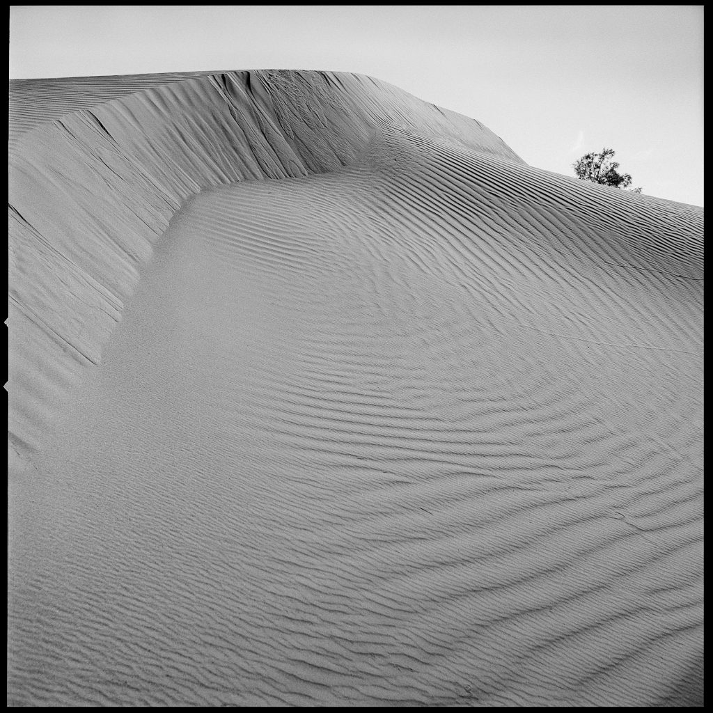 Sand and tree image in black and white from Morocco
